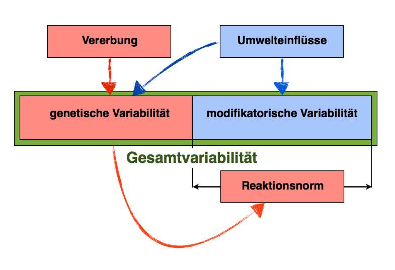 Variabilität von Populationen