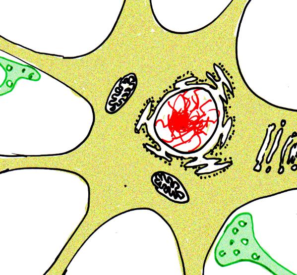 Neurobiologie Helmich - 1.1.1.1 Bau einer Nervenzelle