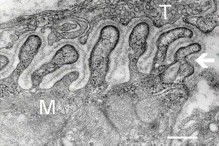 aufbau einer synapse