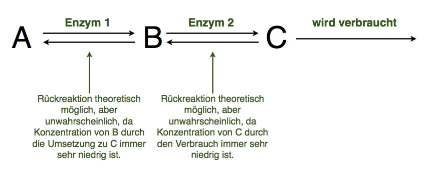 katalysieren definition biologie