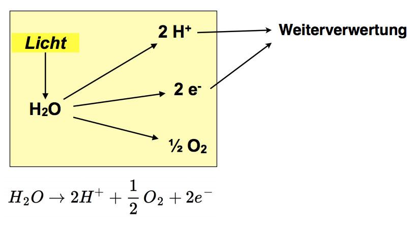 gleichung lichtabhängige reaktion